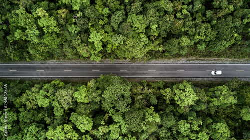 Fotografia, Obraz Road through the green jungle forest, Aerial view street asphalt road going through forest, Adventure and travel ecosystem and ecology healthy environment concept and background