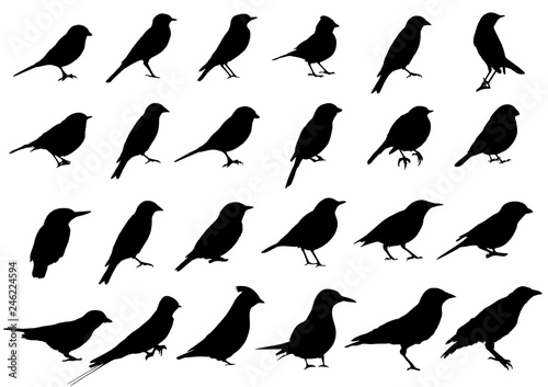 Fototapeta Birds silhouettes collection