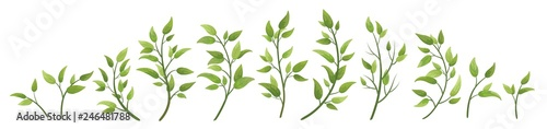 Tela Vector designer elements set collection green branch with leaves