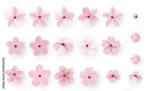Canvastavla Realistic sakura or cherry blossom; Japanese Spring Flower Sakura; Pink Cherry Flower