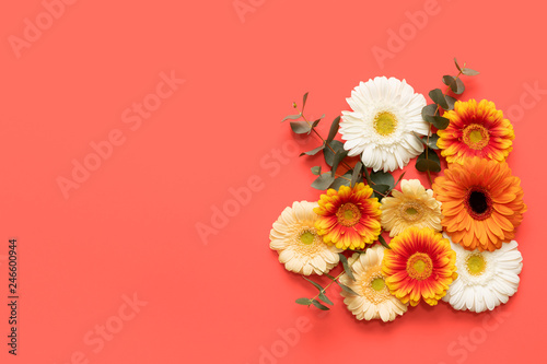 Happy Mother's Day, Women's Day, Valentine's Day or Birthday Living Coral Pantone Color Background. Coral flat lay greeting card with beautiful gerbera flowers.