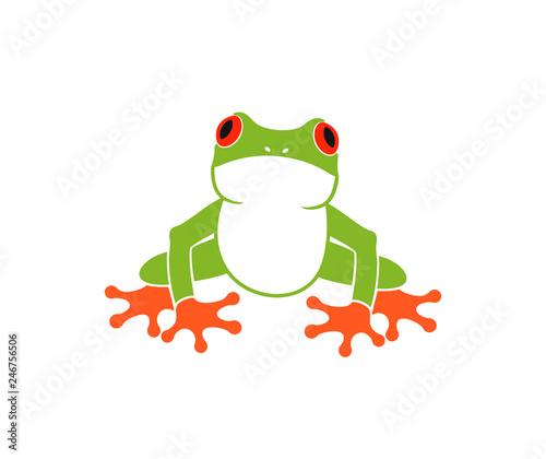 Obraz na płótnie Red eye frog. Tree frog. Isolated frog on white background