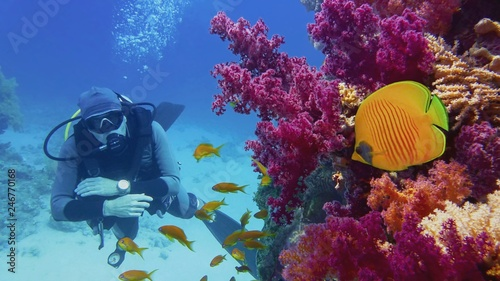 Stampa su Tela Scuba diver watching beautiful coral reef with purple soft corals and beautiful