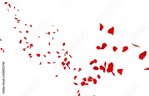 Photo Red rose petals fly into the distance