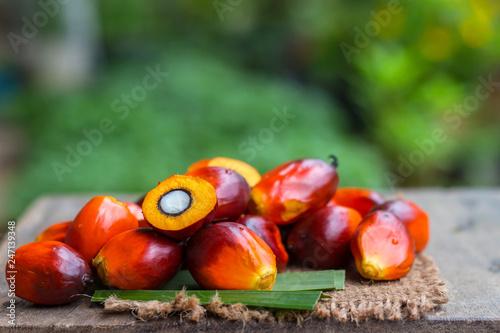 Palm Oil fruit of vegetable oil on old wooden floor.