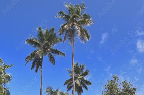 Fotografie, Obraz Beautiful palm trees at the beach on the paradise islands Seychelles
