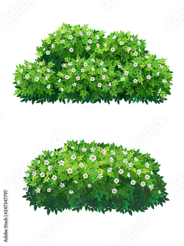 Fotografie, Obraz Green bushes and tree crown with white flowers.