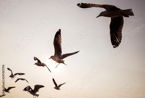 Canvas Print Flock of seagulls flying in the sky