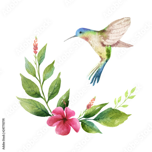 Fotografia Watercolor vector card green leaves, hummingbird and flowers isolated on white background
