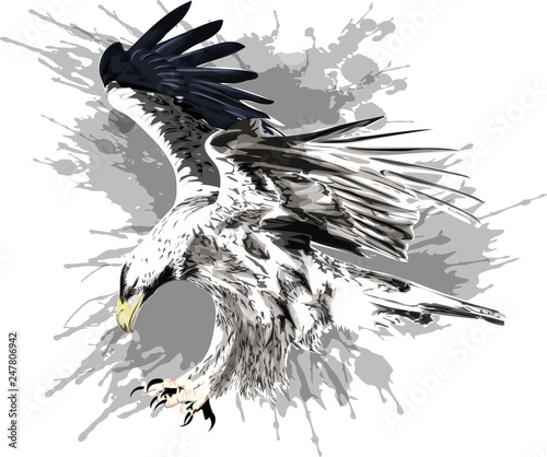 Photo Flying eagle. Stylized vector illustration