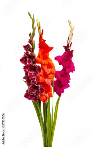 Photo bouquet of gladioli isolated