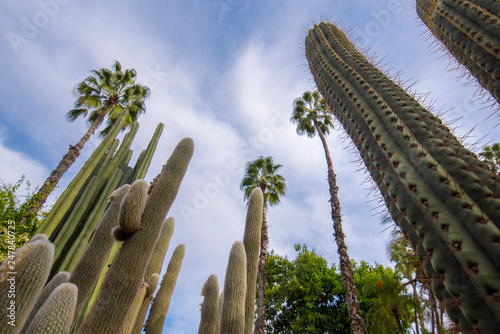 Panorama of The Majorelle Garden is a botanical garden and artist's landscape park in Marrakech, Morocco Fototapete