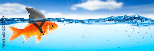 Obraz na plátně Goldfish With Shark Fin Costume - Brave Ambitious Entrepreneur/ Business Vision