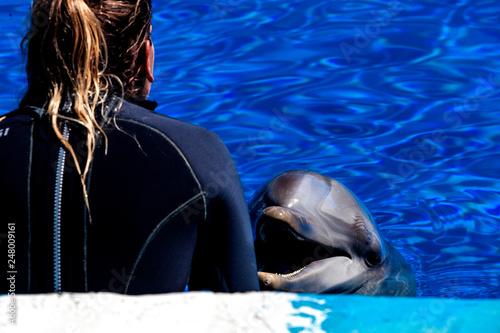 Valencia, Spain - April, 2017: city of arts and scienza, Aquarium Oceanarium, dolphin