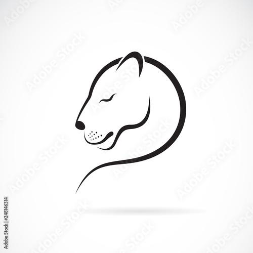 Fotografia Vector of female lion design on white background
