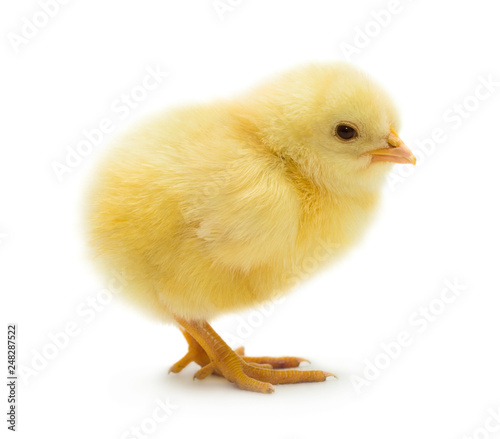Tableau sur Toile Cute little chicken