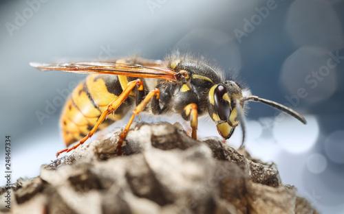 Fényképezés Wasp