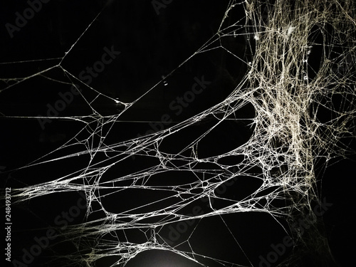 Obraz na płótnie Web of spider in urban art