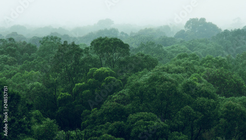 Canvas Print Rainforest jungle aerial view
