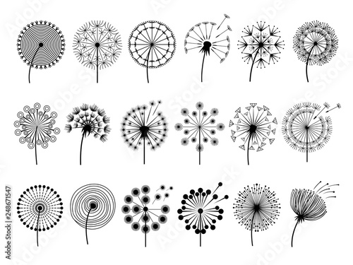 Dandelion silhouettes. Herbal illustrations flowers decoration concept vector botany illustrations. Black silhouette of summer flower dandelion