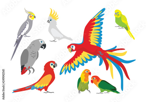 Fototapeta Set of vector cartoon colorful parrots in different poses