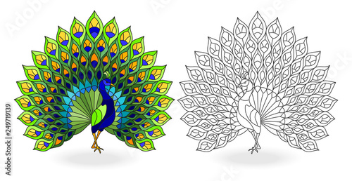 Canvas Print Set of stained glass elements with peacock birds, contour and color images, isol