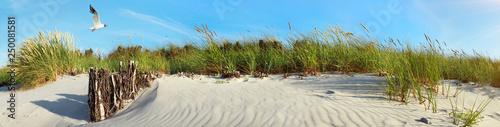Fotografia Baltic Sea Beach Dunes with Seagull near Sunset - Panorama