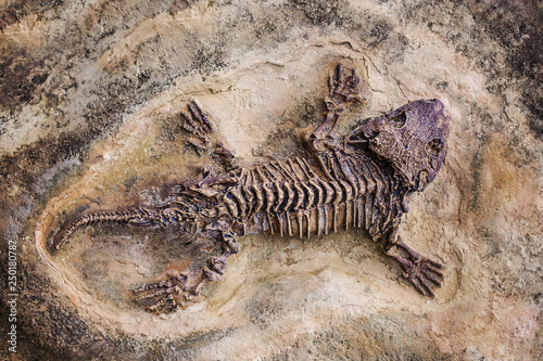 Fototapeta Fossil dinosaur lizard