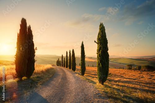 Fototapeta premium włochy toskania krajobraz wzgórza; letnie pola uprawne i wiejska droga;