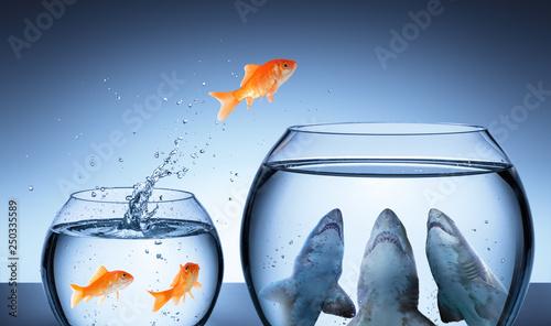 Canvas Print Shark Trap - Business Risk Concept - Goldfish Jumping In Shark Tank