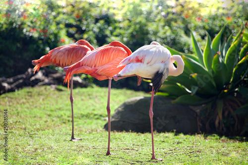 Leinwand Poster Three beautiful flamingos, two pink flamingos and one white flamingo stand in ro