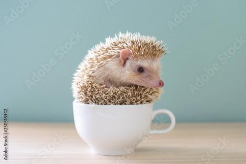 Obraz na plátne Cute hedgehog on a cup