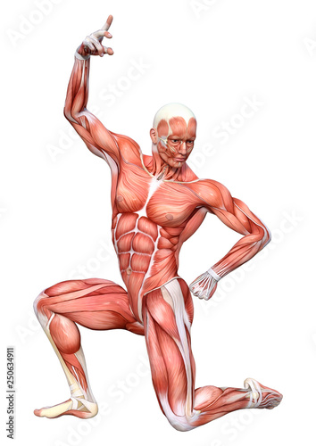 Photographie 3D Rendering Male Anatomy Figure on White