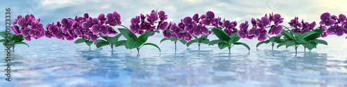 Photo panorama of purple orchids over the water surface with reflections, 3d illustrat