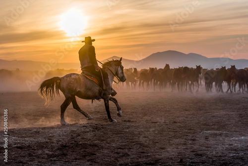 Tela The cowboy who tamed horses at sunset