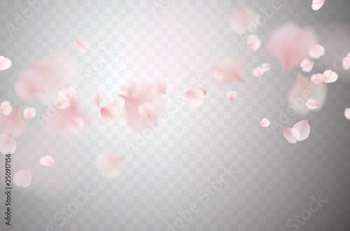 Carta da parati Petals of pink rose isolated on transparent background