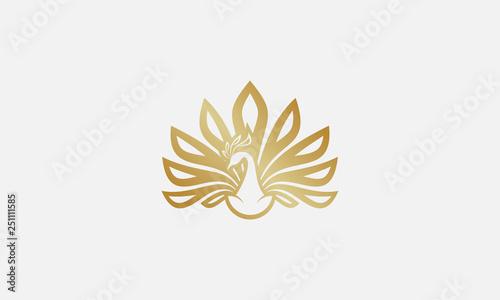Photo peacock logo design