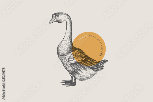 Fotografia Retro engraving goose