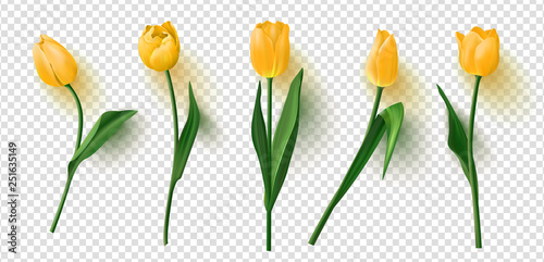 Canvas Print Realistic vector tulips set on transparent background