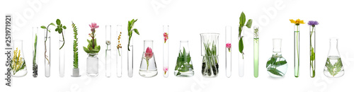 Laboratory glassware with plants on white background
