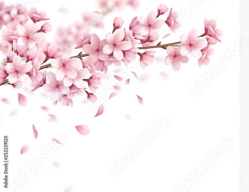 Sakura Realistic Background Fototapeta
