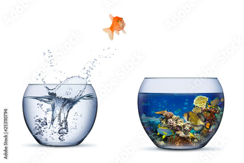 Fototapeta goldfish jump out of bowl into coral reef paradise fish change chance freedom co