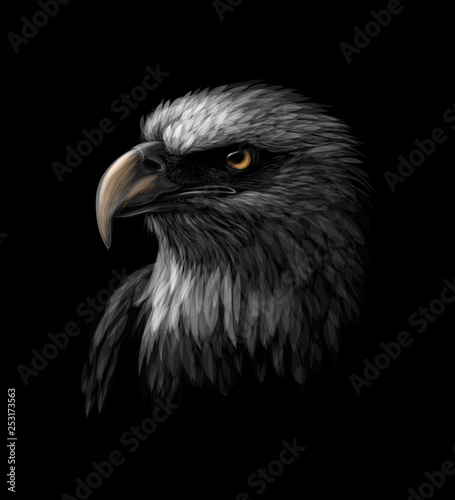 Photographie Portrait of a head of a bald eagle on a black background