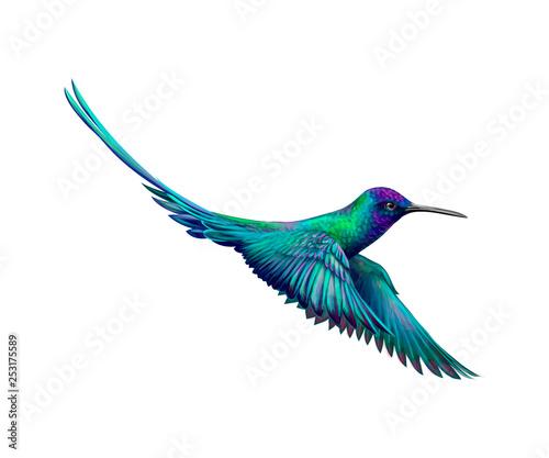 Obraz na płótnie Hummingbird from a splash of watercolor, hand drawn sketch