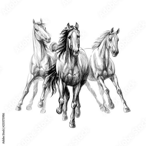 Fotografia Three horses run gallop on white background, hand drawn sketch