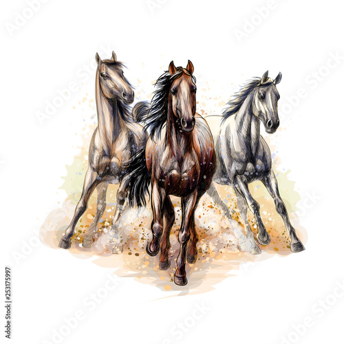 Photo Three horses run gallop from a splash of watercolor, hand drawn sketch