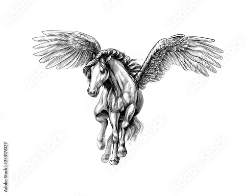 Stampa su Tela Pegasus mythical winged horse. Hand drawn sketch
