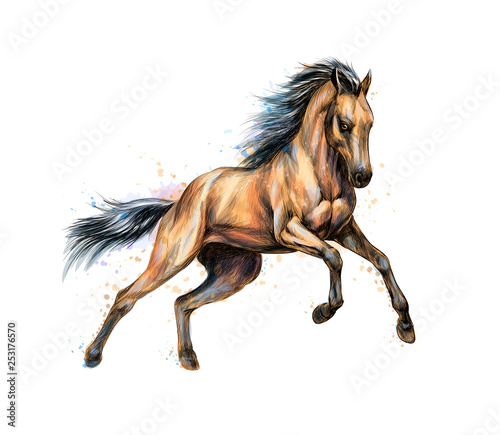 Canvas Print Horse run gallop from splash of watercolors. Hand drawn sketch