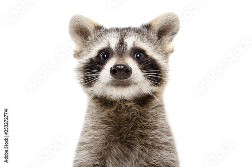 Canvas Print Portrait of a cute funny raccoon isolated on white background
