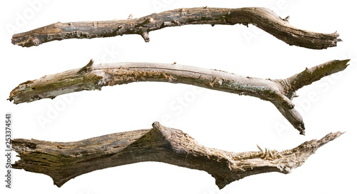 Canvas Print Dry tree branch isolated on white background. Broken branches
